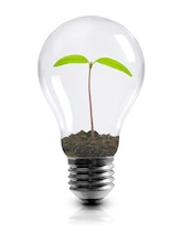 green seedling in light bulb