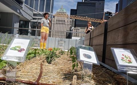 Telus Rooftop Garden